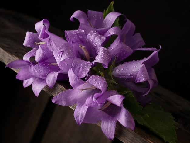 Makro blaue glockenblumen auf einem dunklen natürlichen hintergrund. platz kopieren.
