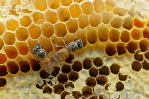 Makro der arbeitsbienen auf bienenwabe, hintergrundhexagonbeschaffenheit,