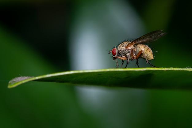 Makro einer fliege auf einem grünen blatt