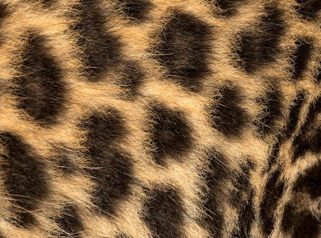 Makro eines gefleckten leopardenjungenpelzes panthera pardus