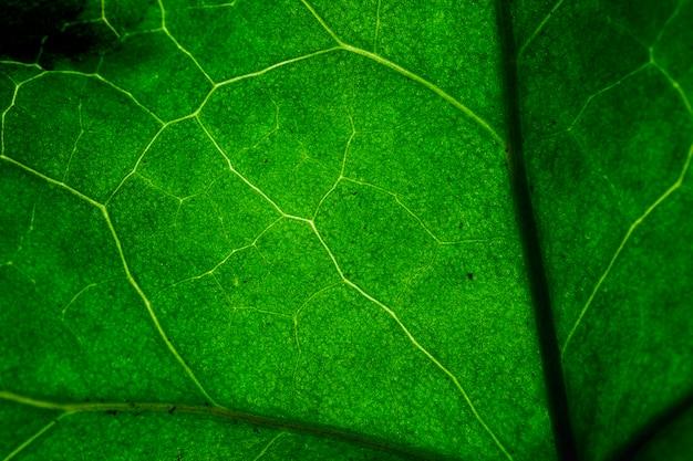 Makro eines grünen blattes