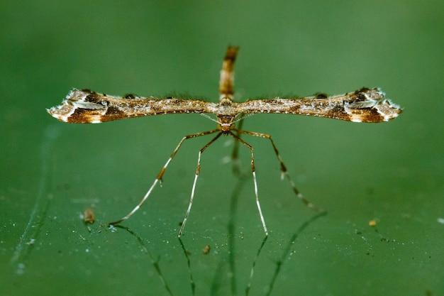 Makro eines insekts auf unscharfem grünem hintergrund