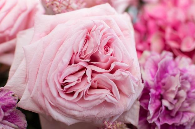 Makro empfindliche frische rosa pfingstrosen-rosenblume