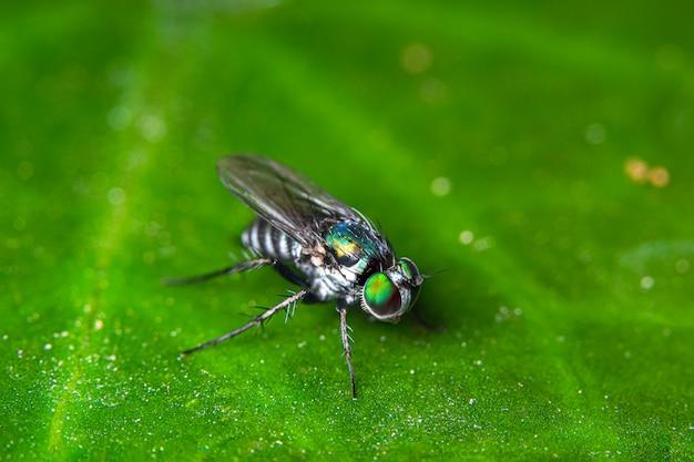 Makro fliegt auf grüne blätter