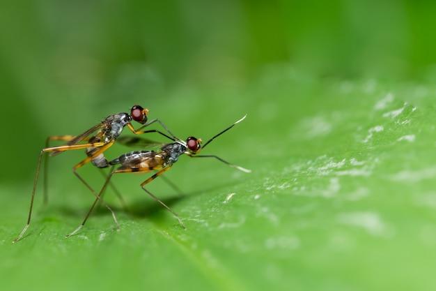 Makro insekt