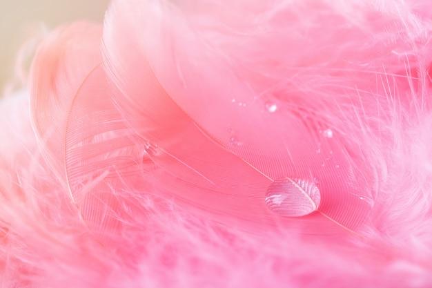Makro mit transparentem tropfen und rosa feder