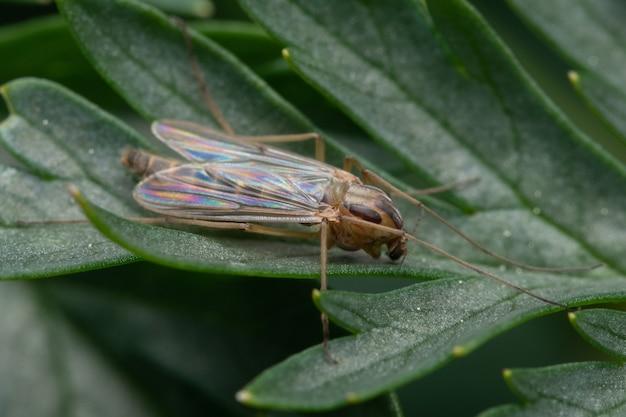 Makro nahaufnahme eines insekts auf dem blatt der pflanze an einer verschwommenen wand