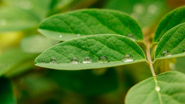 Makro tautropfen auf grünem blatt