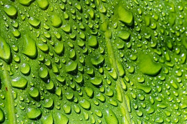 Makro verlassen, auf grün fallen lassen