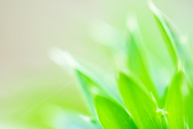Makro von baum-blättern für naturhintergrund und speichern grünes konzept