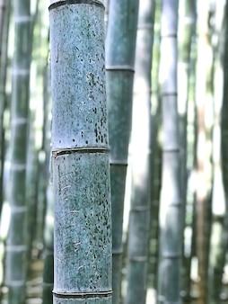 Makroansicht der nahaufnahme zum bambusstock in einem waldgarten