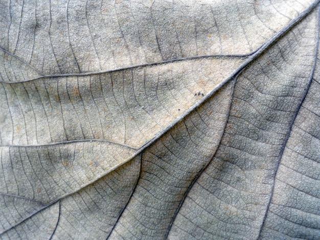 Makroansicht über strukturiertes herbstbraunblatt