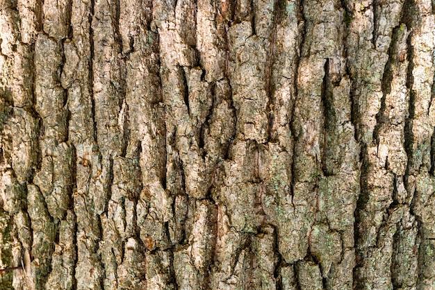 Makroaufnahme der eichenrinde textur kann für natürlichen hintergrund verwendet werden