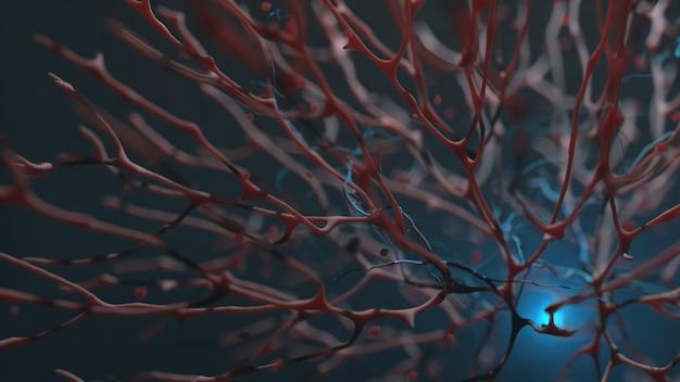 Makroaufnahme des kreislaufsystems von organischem gewebe