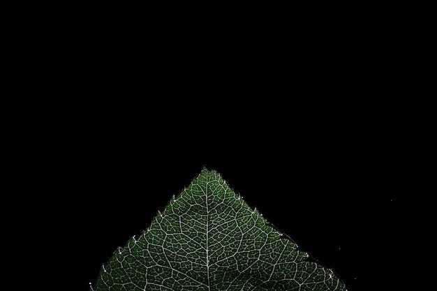 Makroaufnahme eines blütenblattes mit spritzern und wassertropfen. textur von blatt und blütenblatt auf einem hintergrund von verschwommenen spritzern.