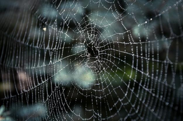 Makroaufnahme eines großen spinnennetzes mit tropfen bedeckt