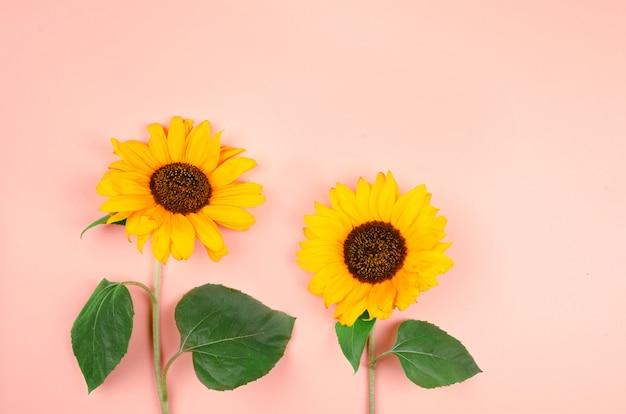 Makroaufnahme mit zwei gelben sonnenblumen auf gelbem hintergrund