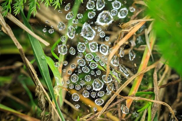 Makroaufnahme von tautropfen in einem spinnennetz