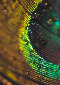Makrobild der pfaufeder mit wassertropfen