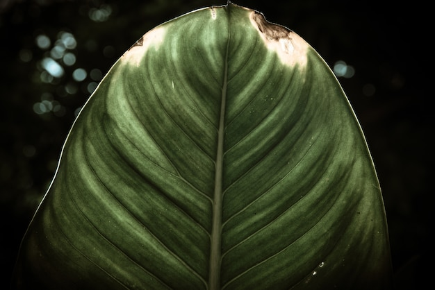 Makrodekoration des blattgrünblattes.