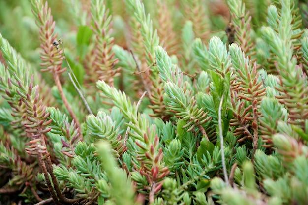 Makrofoto des grünen grases.