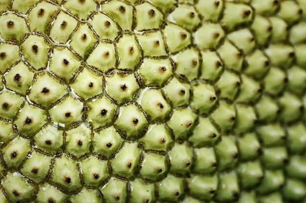 Makrofotografie des dornenmusters auf jackfrucht.