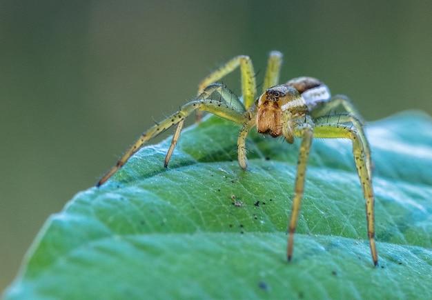 Makrofotografie eines insekts