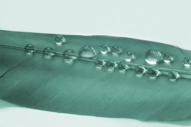 Makrofotografie von wassertropfen auf einer vogelfeder