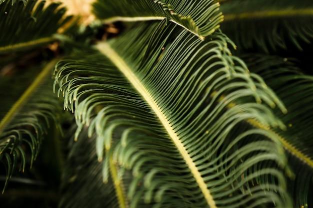 Makrophotographie der grünen tropischen anlage