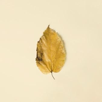 Makroschuß des herbstblattes