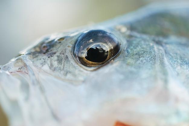 Makroschuß eines fischauges