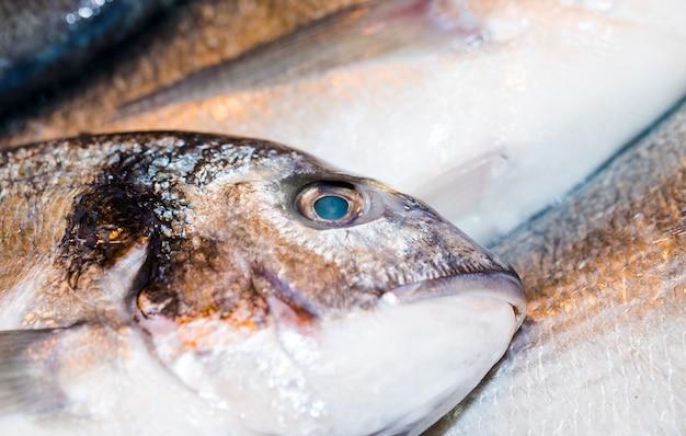 Makroschuß von frischen fischen