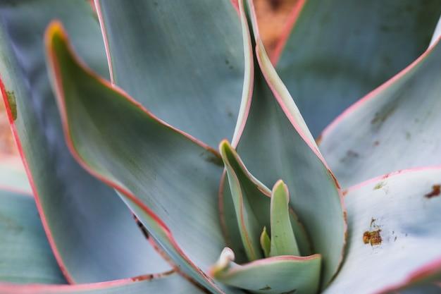 Makroschuß von grünen pflanzenblättern Kostenlose Fotos