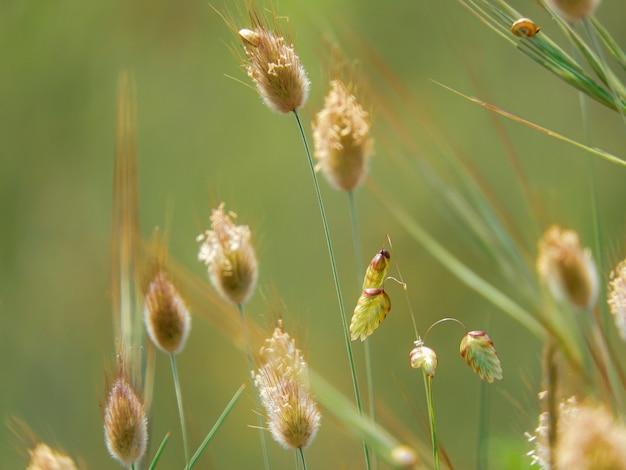 Makroselektiver fokusschuss von wachsenden pflanzen auf einem grün