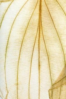 Makrotextur von trockenen blattpflanzen für den hintergrund. flache herbariumdetails.