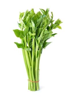 Malabar-spinat oder ceylon-spinat lokalisiert auf weiß