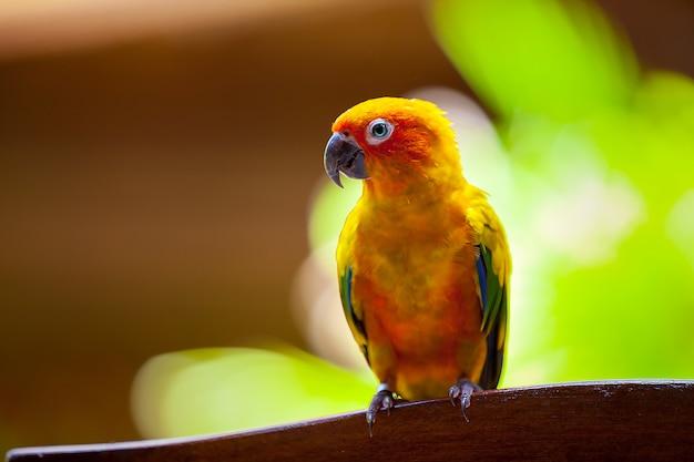 Malediven, ein papageienvogel
