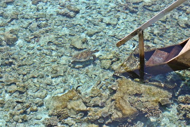 Malediven-korallenhaus für meeresschildkröte und fische, draufsicht vom wasserlandhaus mit hölzerner treppe, unscharfer fokus.