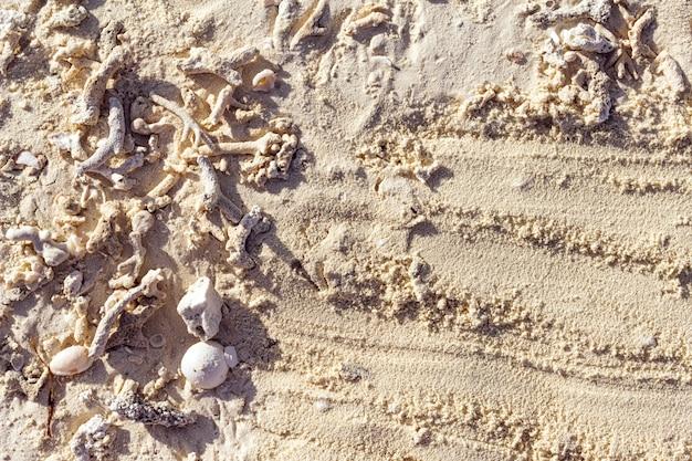 Malediven-sand mit oberteilkorallen.