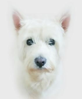 Malerei eines west highland terrier hund