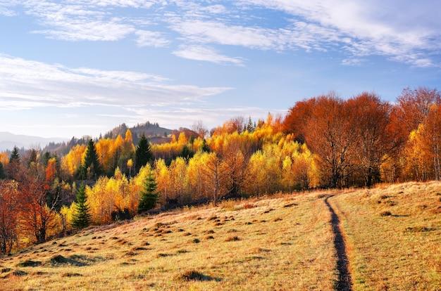 Malerische bergstraße. herbstlandschaft mit morgennebel. schöner wald in den hügeln. birken mit gelben blättern