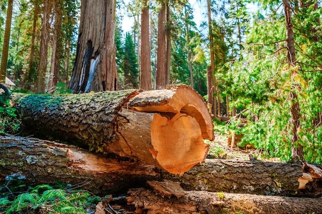 Malerische landschaft im sequoia nationalpark usa