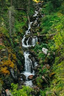 Malerische landschaft mit schönem wasserfall im wald unter reicher vegetation. klares quellwasser fließt vom berghang. atmosphärische waldlandschaft mit gebirgsbach. wildpflanzen und moose auf felsen.