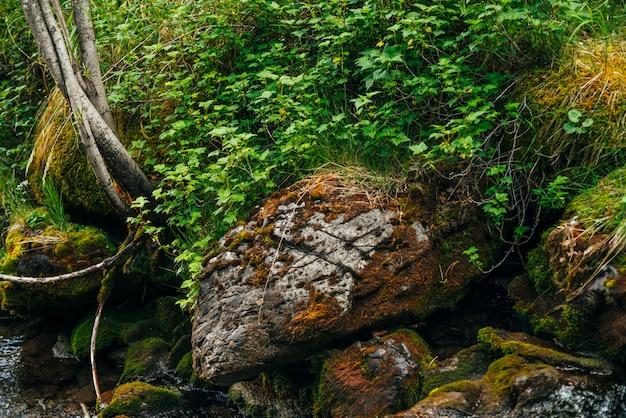 Malerische landschaft zu schönem grün und pflanzenwurzeln auf moosigen felsblöcken nahe kleinem fluss. reiche vegetation auf steinen mit moosen in der nähe von quellwasser. waldlandschaft mit wilder flora nahe gebirgsbach.