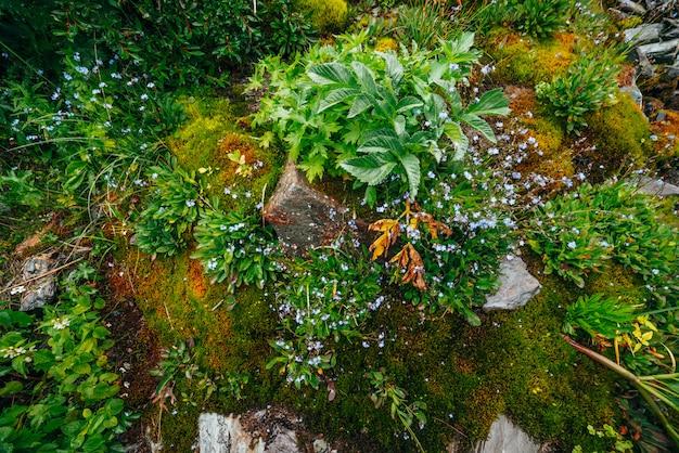 Malerische natur mit dichtem moos und üppiger vegetation der berge. moosiger hang mit frischem grün und vielen kleinen blumen am berghang. nasse pflanzen. bunter hintergrund der reichen alpinen flora.