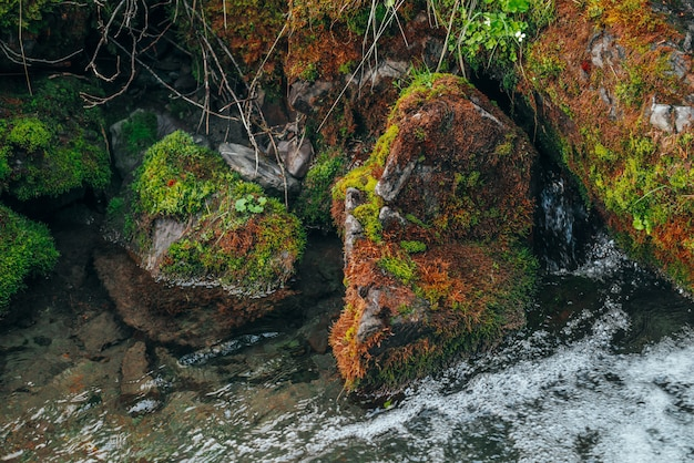 Malerische natur mit schönen moosigen felsblöcken und reicher vegetation in der nähe von klarem quellwasser aus der nähe. natürlicher hintergrund mit steinen und wilder flora nahe transparentem wasser des kleinen gebirgsflusses.