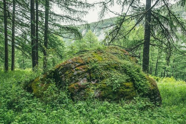 Malerische waldlandschaft mit großem moosigem stein mit grünen gräsern zwischen dickichten und bäumen. lebendige landschaft mit großen felsbrocken mit moose und üppiger vegetation. grüner felsen mit moos und wilder flora im wald