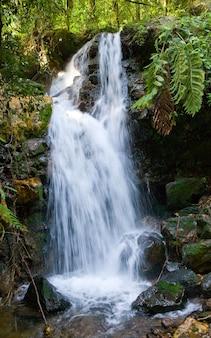 Malerische waldwasserfälle im bwindi-nationalpark