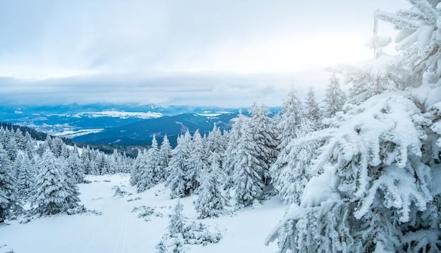 Malerische winterlandschaft vom berg mit verschneiten pinien