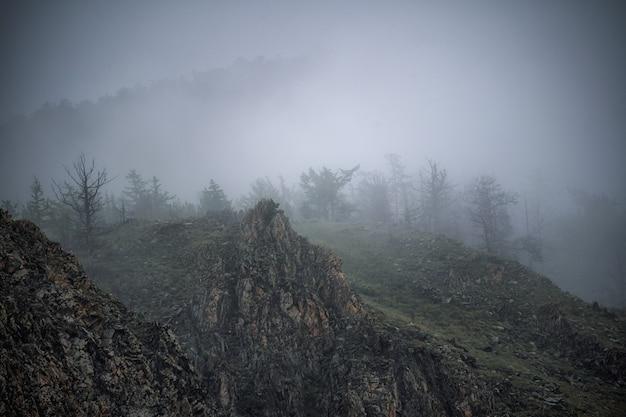 Malerischer berglandschaftsblick auf den schwarzwald deutschland bedeckt im nebel bunten reisehintergrund